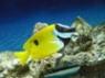 FishyFishy!